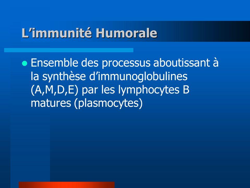 L'immunité Humorale Ensemble des processus aboutissant à la synthèse d'immunoglobulines (A,M,D,E) par les lymphocytes B matures (plasmocytes)