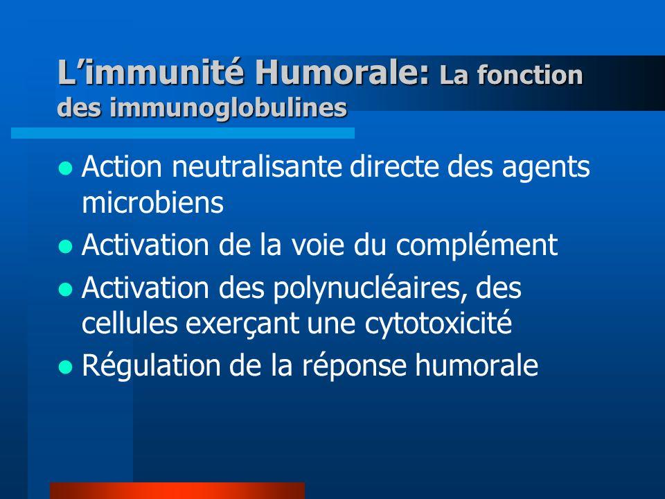 L'immunité Humorale: La fonction des immunoglobulines