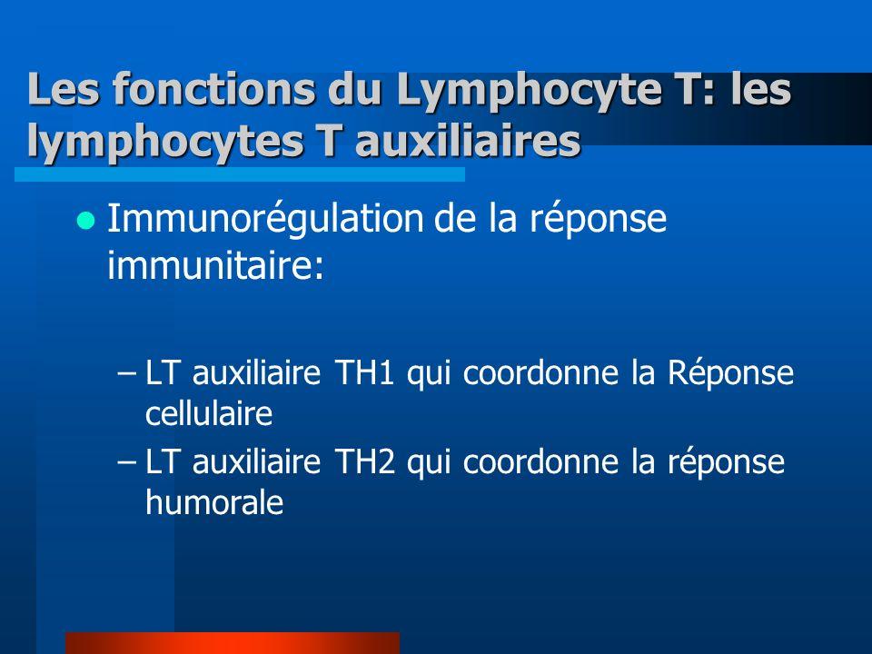 Les fonctions du Lymphocyte T: les lymphocytes T auxiliaires