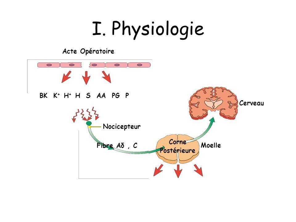I. Physiologie Acte Opératoire BK K+ H+ H S AA PG P Cerveau