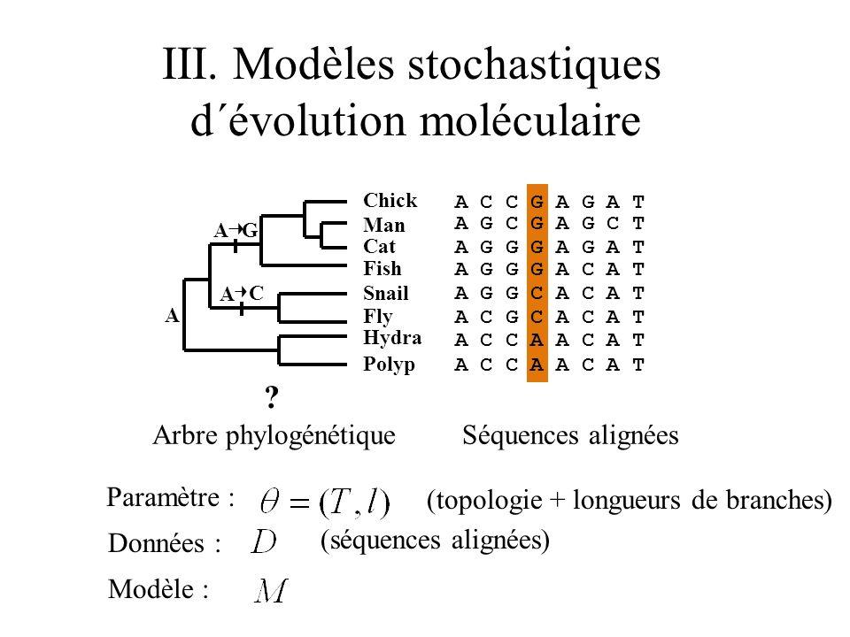 III. Modèles stochastiques d´évolution moléculaire