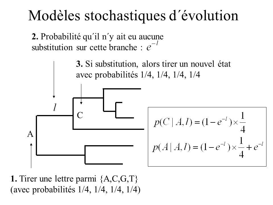 Modèles stochastiques d´évolution