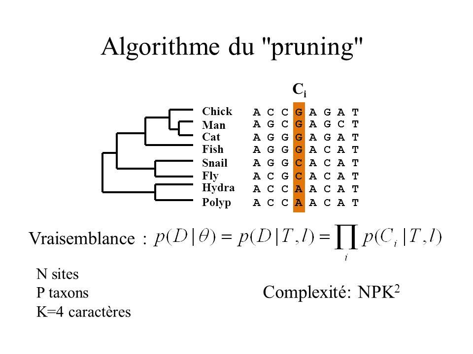 Algorithme du pruning Vraisemblance : Complexité: NPK2 Ci N sites
