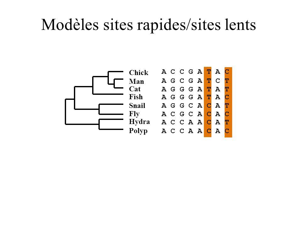 Modèles sites rapides/sites lents