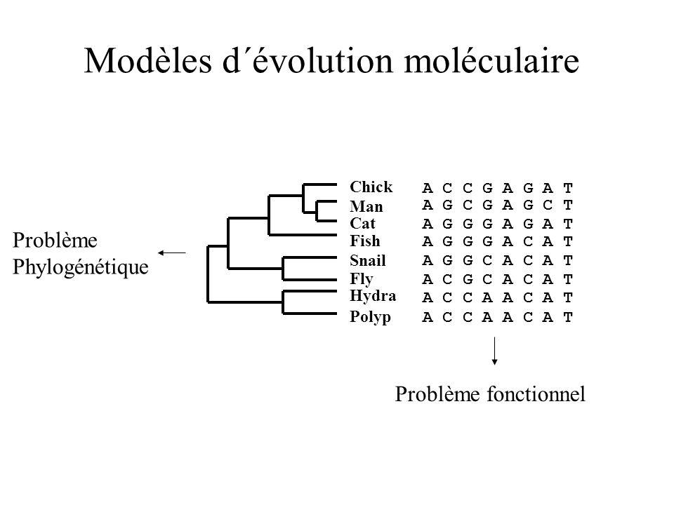 Modèles d´évolution moléculaire