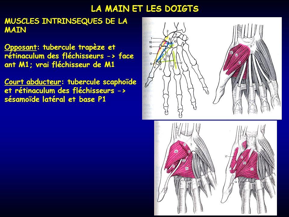 LA MAIN ET LES DOIGTS MUSCLES INTRINSEQUES DE LA MAIN