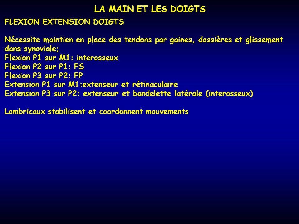 LA MAIN ET LES DOIGTS FLEXION EXTENSION DOIGTS