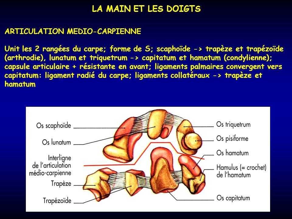 LA MAIN ET LES DOIGTS ARTICULATION MEDIO-CARPIENNE