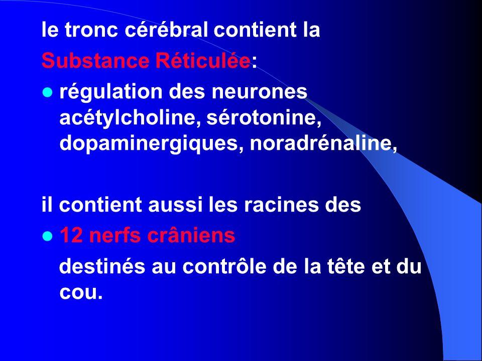 le tronc cérébral contient la