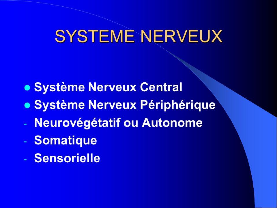 SYSTEME NERVEUX Système Nerveux Central Système Nerveux Périphérique