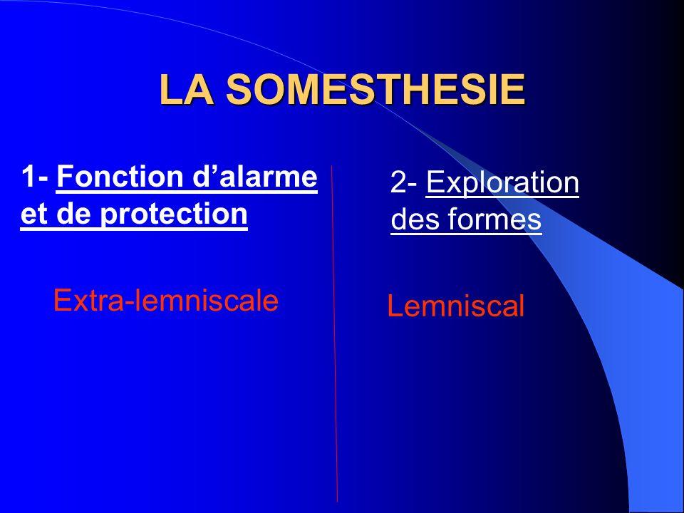LA SOMESTHESIE 1- Fonction d'alarme 2- Exploration des formes