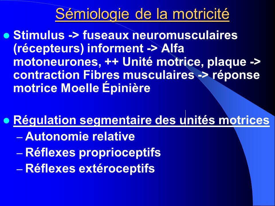 Sémiologie de la motricité