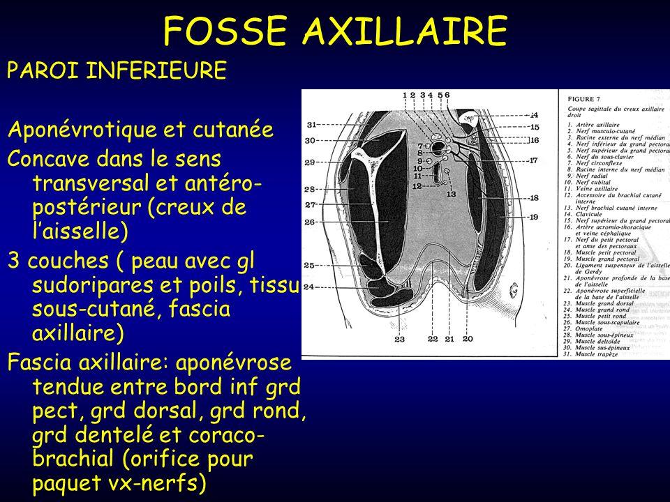 FOSSE AXILLAIRE PAROI INFERIEURE Aponévrotique et cutanée