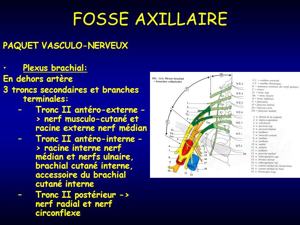 FOSSE AXILLAIRE PAQUET VASCULO-NERVEUX Plexus brachial: