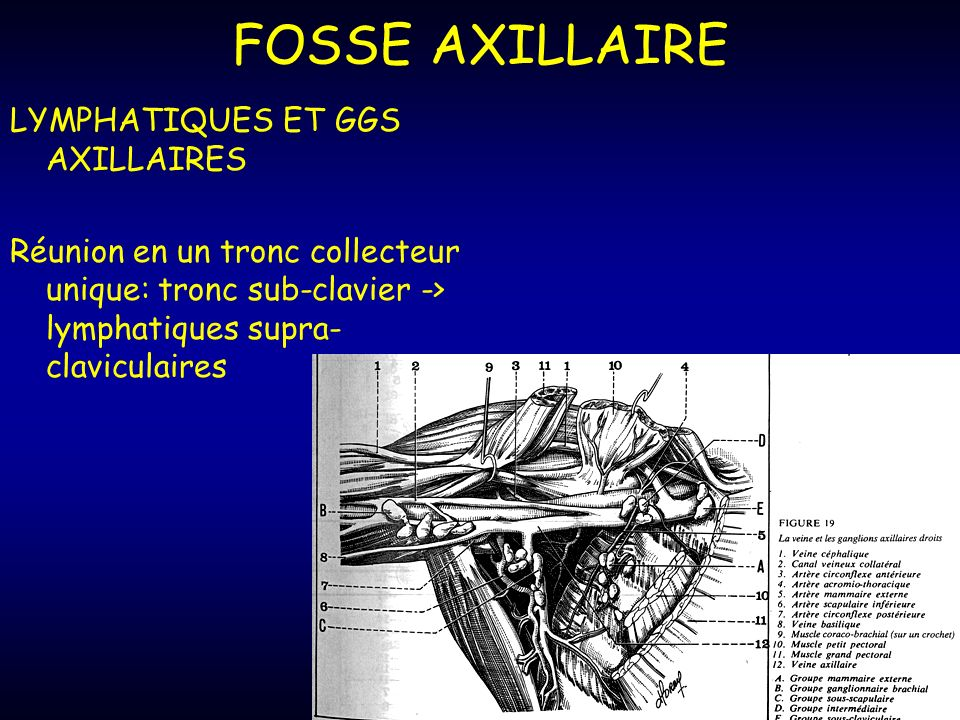 FOSSE AXILLAIRE LYMPHATIQUES ET GGS AXILLAIRES