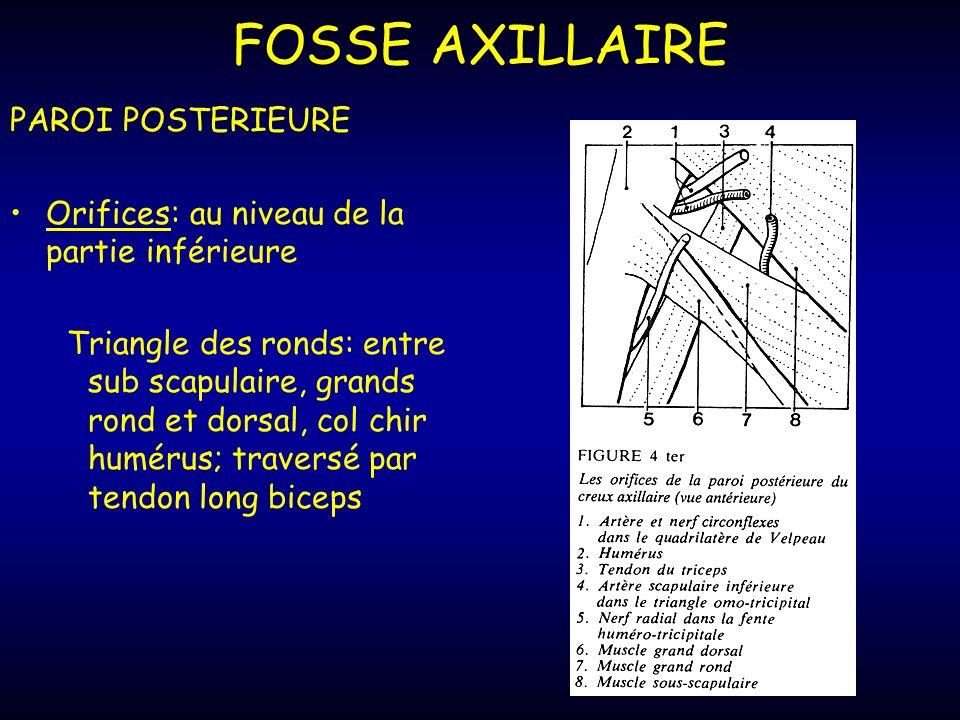 FOSSE AXILLAIRE PAROI POSTERIEURE