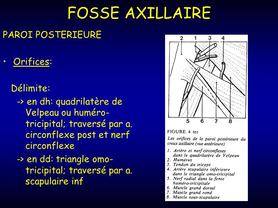FOSSE AXILLAIRE PAROI POSTERIEURE Orifices: Délimite: