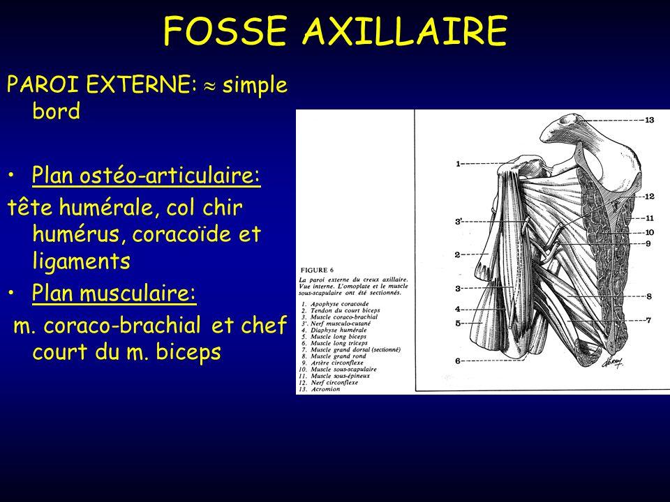 FOSSE AXILLAIRE PAROI EXTERNE:  simple bord Plan ostéo-articulaire: