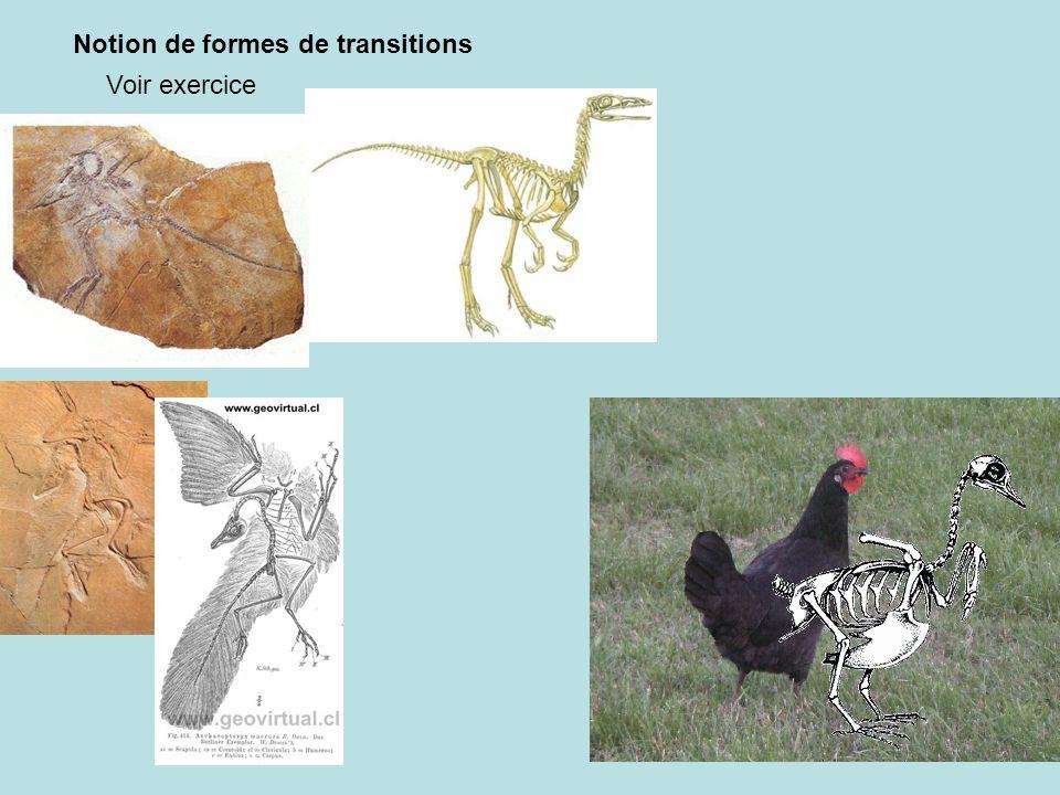 Notion de formes de transitions