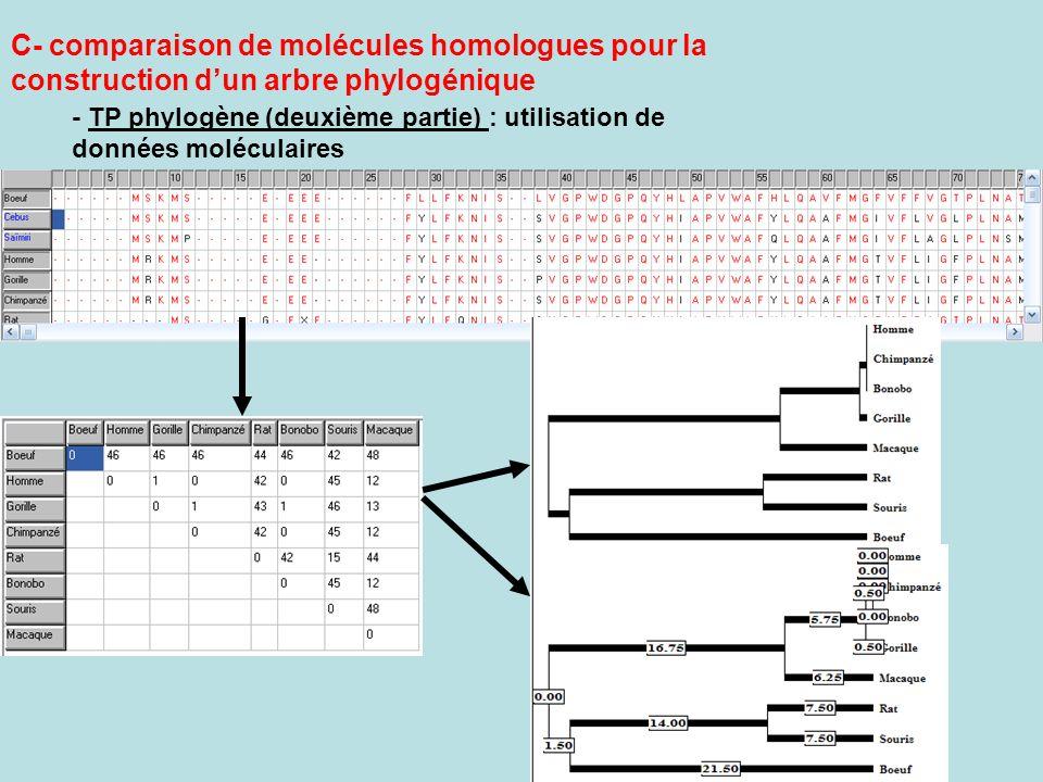 C- comparaison de molécules homologues pour la construction d'un arbre phylogénique