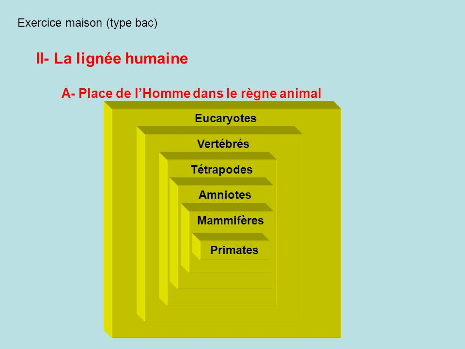 II- La lignée humaine A- Place de l'Homme dans le règne animal