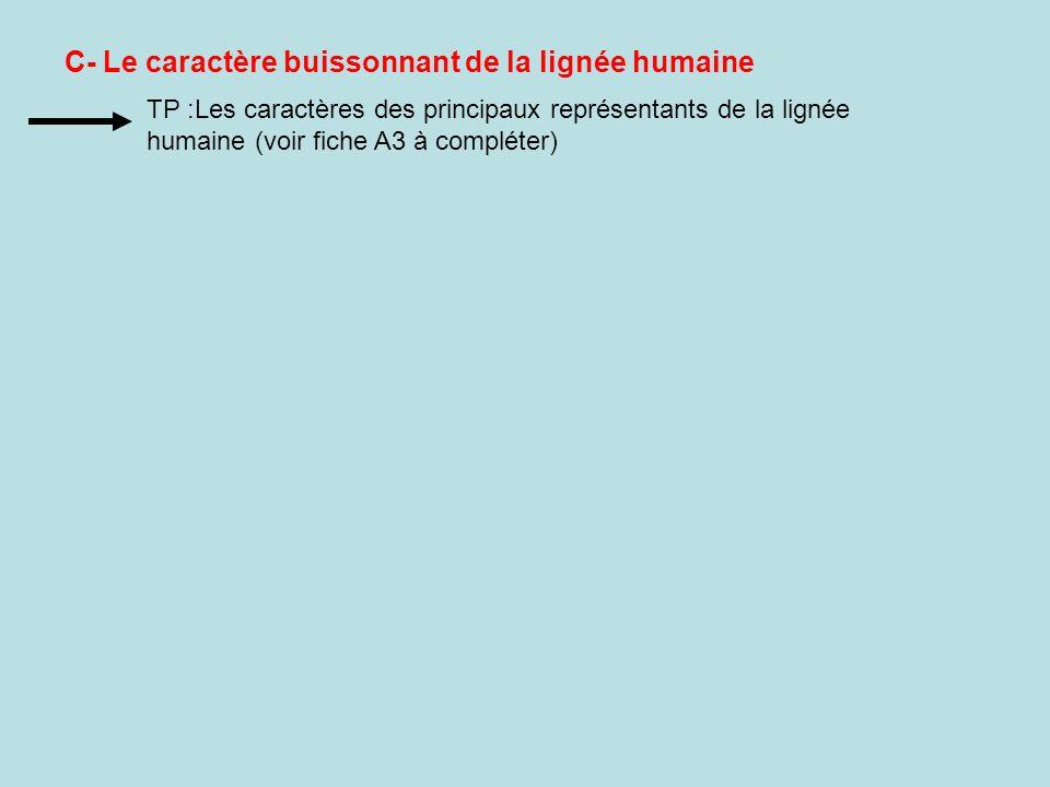 C- Le caractère buissonnant de la lignée humaine