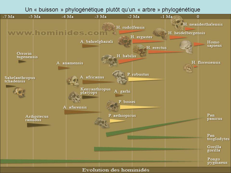 Un « buisson » phylogénétique plutôt qu'un « arbre » phylogénétique