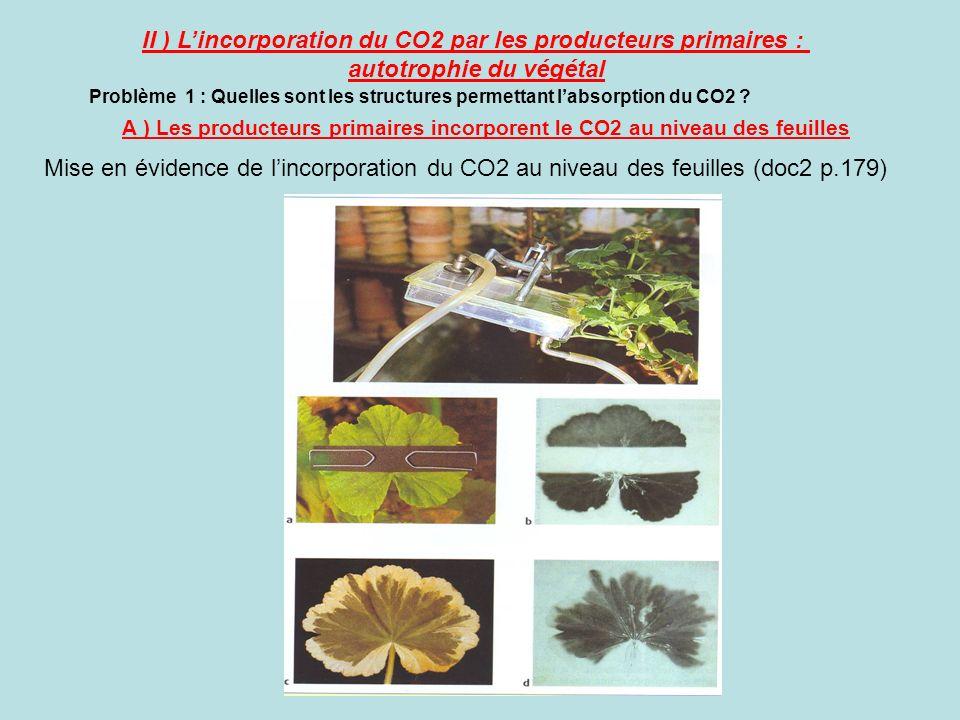II ) L'incorporation du CO2 par les producteurs primaires :