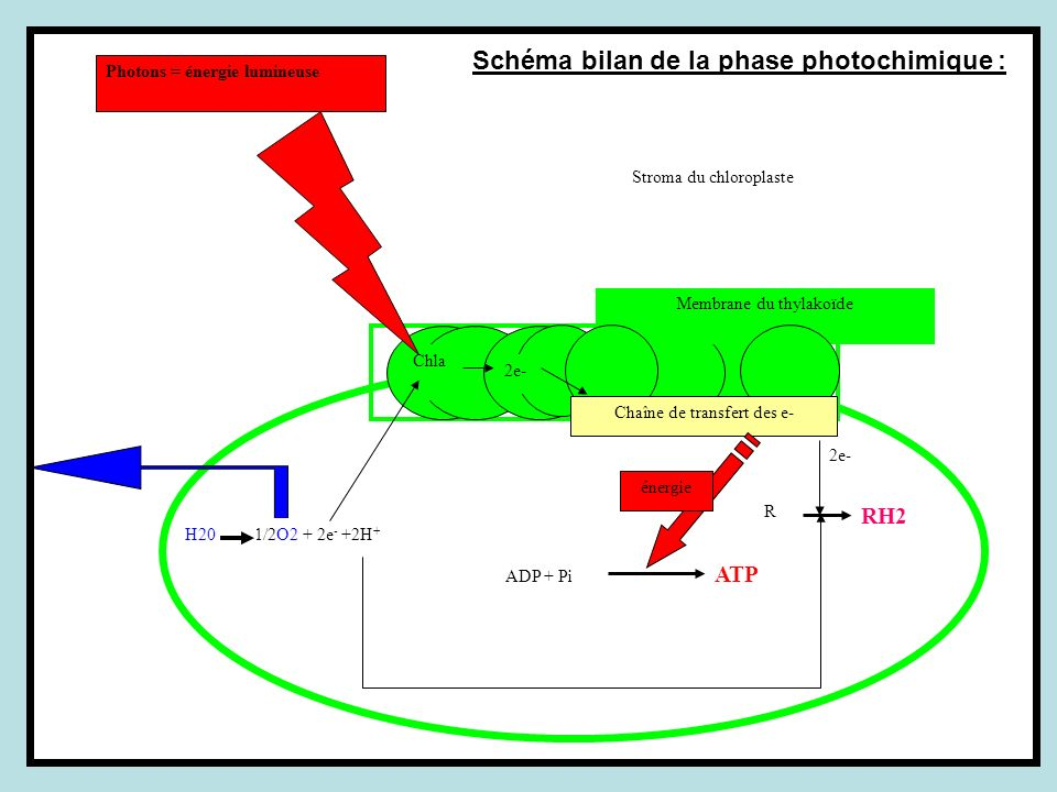 Schéma bilan de la phase photochimique :