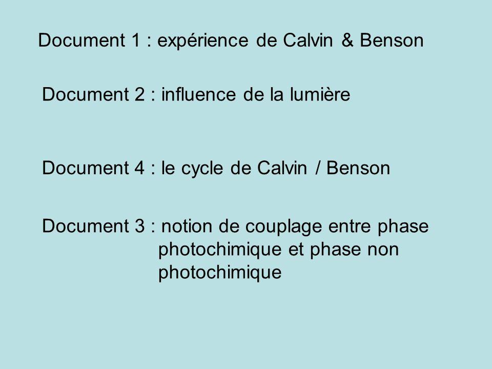 Document 1 : expérience de Calvin & Benson