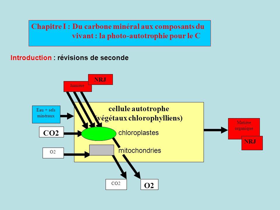 (végétaux chlorophylliens)