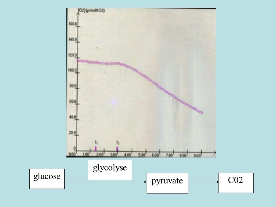 glycolyse glucose pyruvate C02