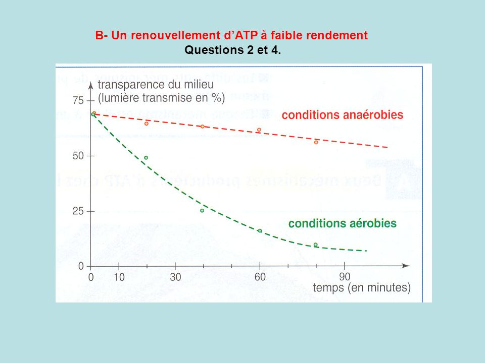 B- Un renouvellement d'ATP à faible rendement