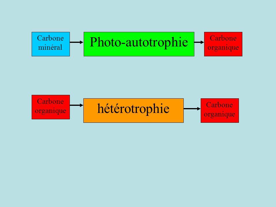 Photo-autotrophie hétérotrophie Carbone minéral Carbone organique
