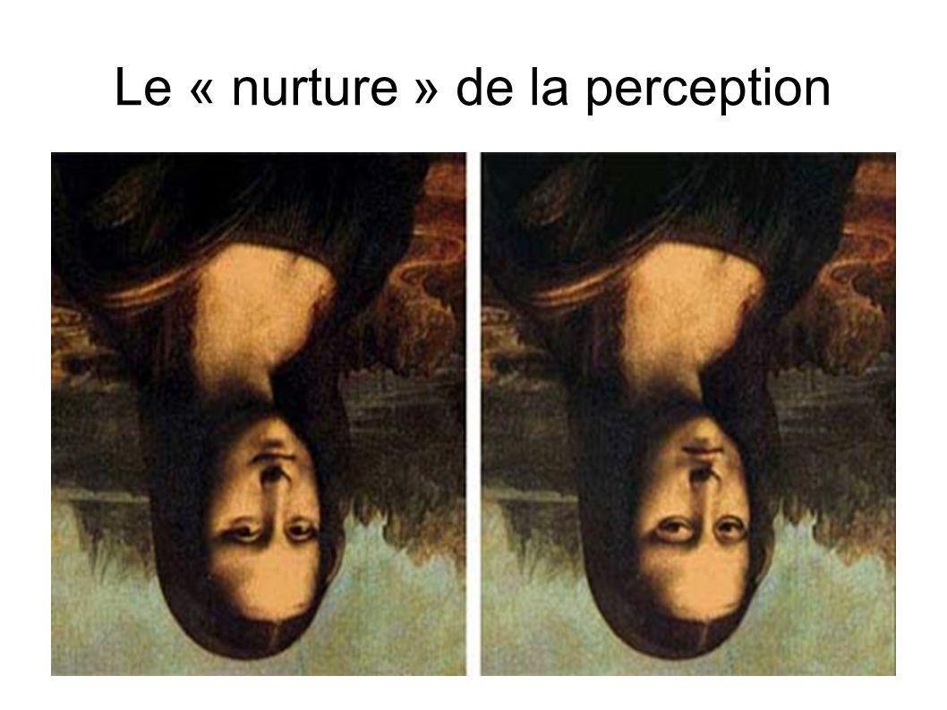 Le « nurture » de la perception