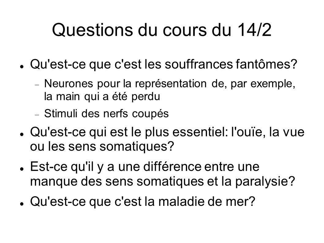 Questions du cours du 14/2 Qu est-ce que c est les souffrances fantômes Neurones pour la représentation de, par exemple, la main qui a été perdu.