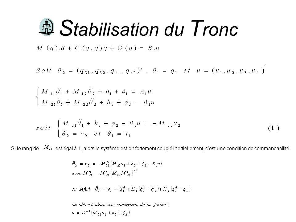 Stabilisation du Tronc