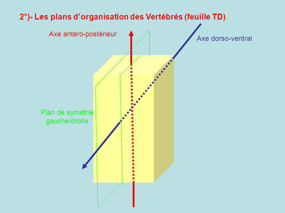Plan de symétrie gauche/droite