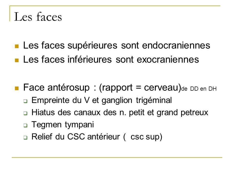 Les faces Les faces supérieures sont endocraniennes