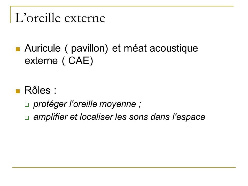 L'oreille externe Auricule ( pavillon) et méat acoustique externe ( CAE) Rôles : protéger l oreille moyenne ;