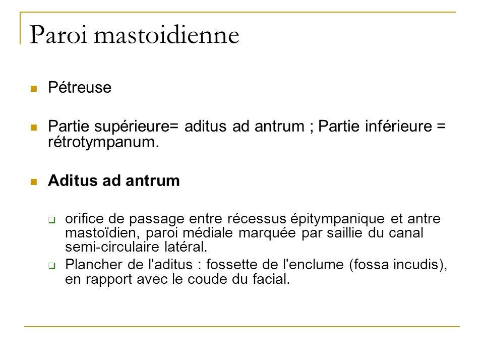Paroi mastoidienne Pétreuse