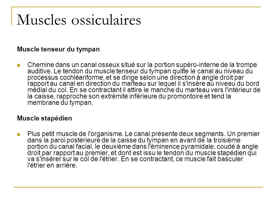 Muscles ossiculaires Muscle tenseur du tympan