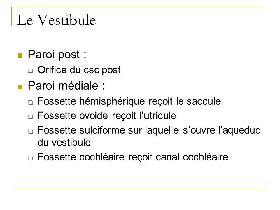 Le Vestibule Paroi post : Paroi médiale : Orifice du csc post