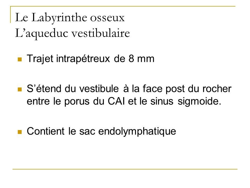 Le Labyrinthe osseux L'aqueduc vestibulaire