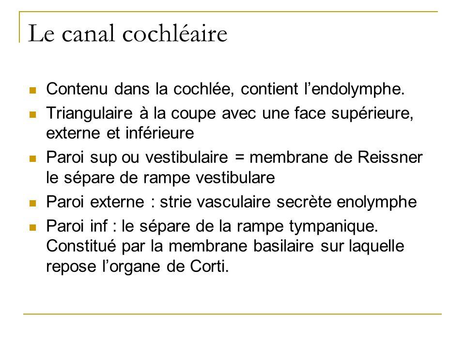 Le canal cochléaire Contenu dans la cochlée, contient l'endolymphe.