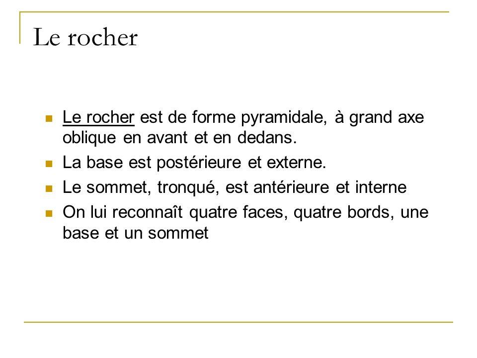 Le rocher Le rocher est de forme pyramidale, à grand axe oblique en avant et en dedans. La base est postérieure et externe.