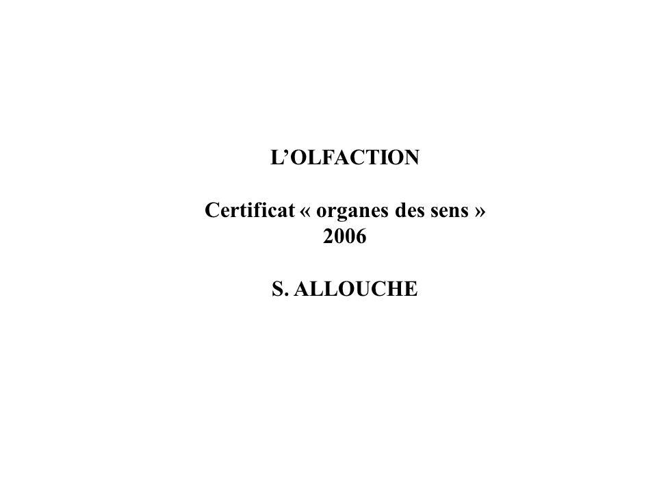 L'OLFACTION Certificat « organes des sens » 2006 S. ALLOUCHE