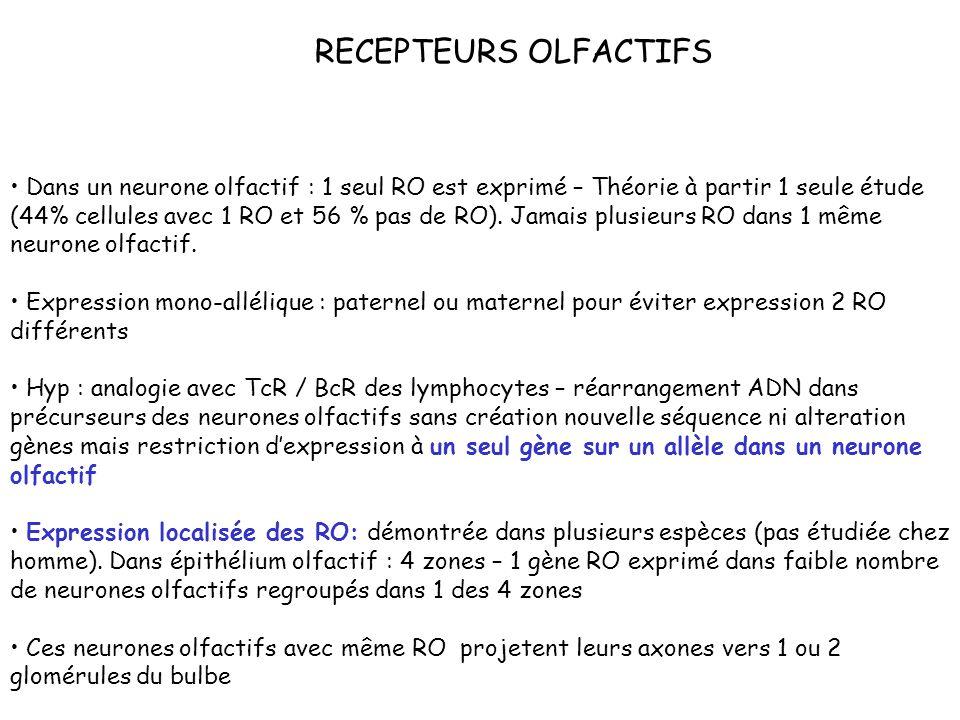 RECEPTEURS OLFACTIFS