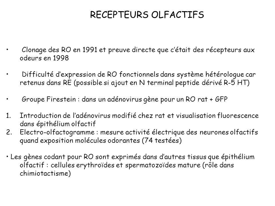 RECEPTEURS OLFACTIFS Clonage des RO en 1991 et preuve directe que c'était des récepteurs aux odeurs en 1998.