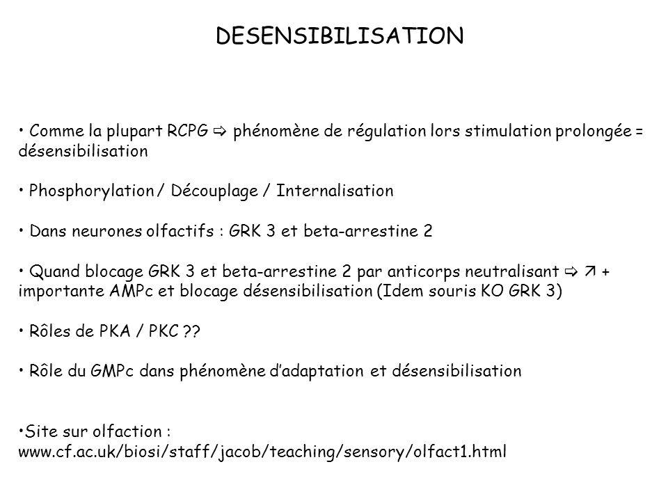DESENSIBILISATION Comme la plupart RCPG  phénomène de régulation lors stimulation prolongée = désensibilisation.